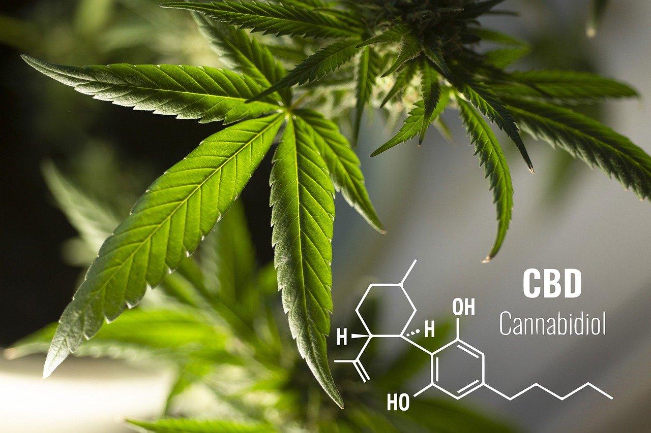 feuille de cannabis avec molécule de cbd